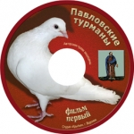 """Павловские турманы"""